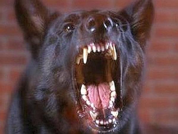 cane morde padrone