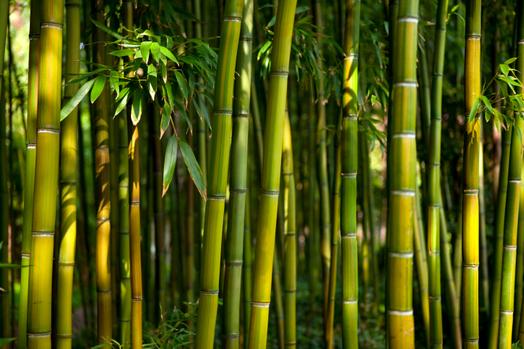 Il primo parco naturale italiano di bambù a Ivrea
