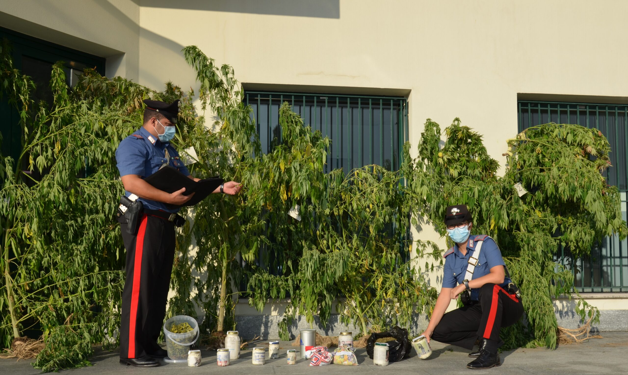 coltiva cannabis